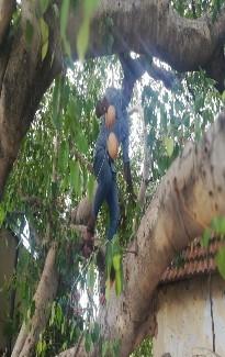 கபசுர குடிநீர் வழங்கல் - ஆயிரம் விளக்கு