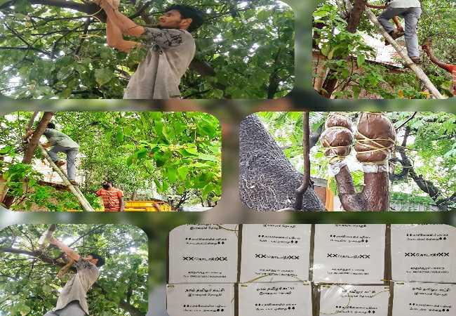 இராயபுரம் - மரம் பதியம் போடும் நிகழ்வு